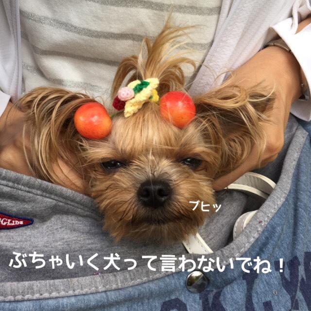 fc2blog_2016062709425107e.jpg