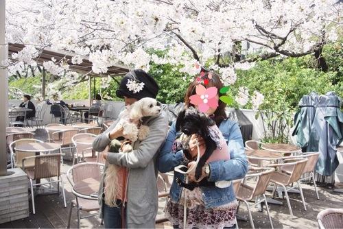 カナルカフェお花見