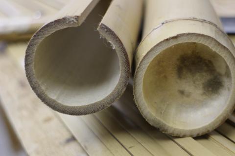 トンキンと真竹の断面