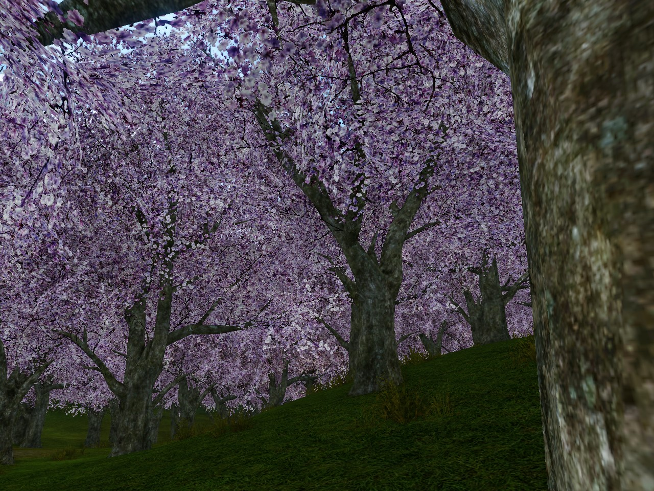 満開の桜の木の下で