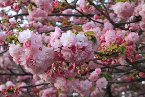 花のまわりみち2