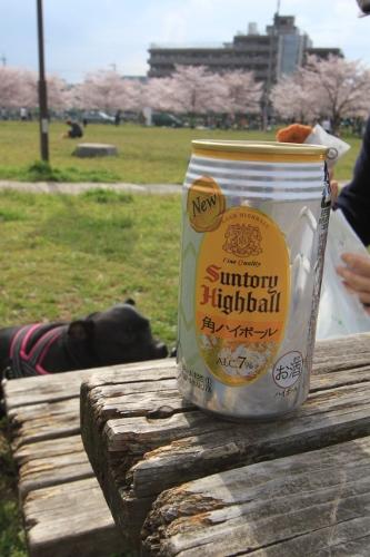 桜満開の日曜日14