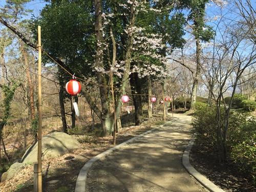 里山の桜10