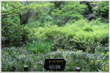 H28042608附属自然教育園