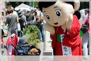 H28052911TVK収穫祭