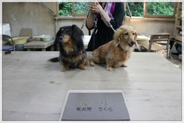 H28061826笹谷窯