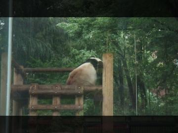 H28063004上野動物園