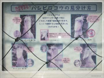 H28063008上野動物園
