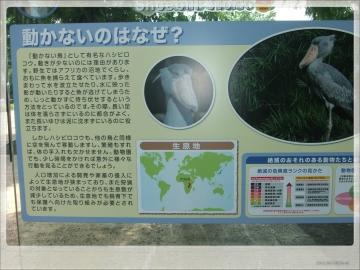 H28063010上野動物園