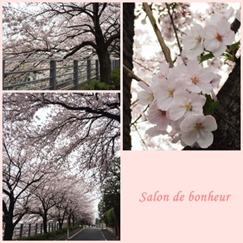 田園調布の桜2016