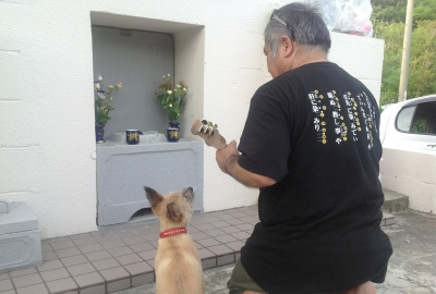 愛犬物語の写真