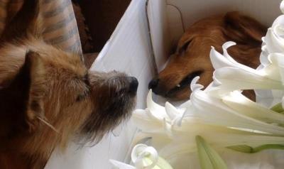 犬のお葬式