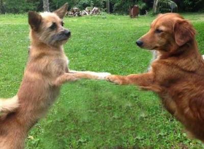 犬の写真 愛犬物語