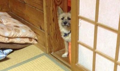 愛犬物語 愛犬サンシンの写真