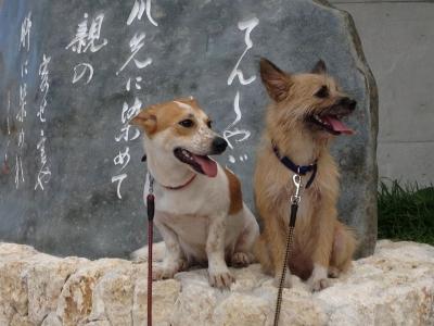 愛犬サンシンの写真