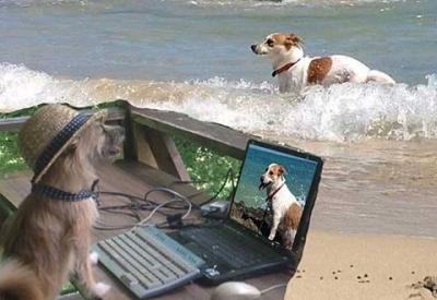 愛犬物語 サンゴの写真