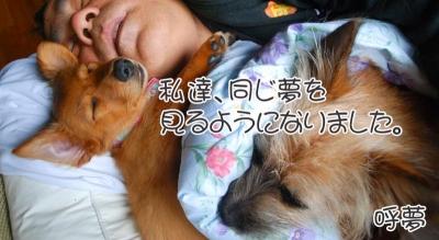 愛犬物語の写真 サンシン、サンバ