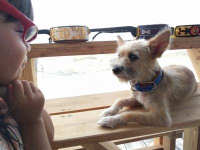 愛犬物語 サンシンちゃんの写真
