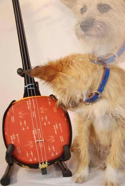 愛犬サンシンちゃんの写真