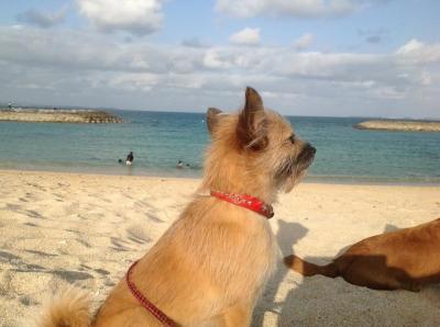 愛犬物語 サンシン、サンバの写真