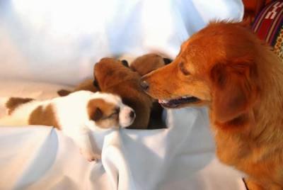 愛犬物語の写真 サンバ