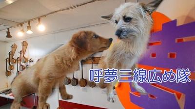 愛犬物語の写真 愛犬サンシン、サンバ