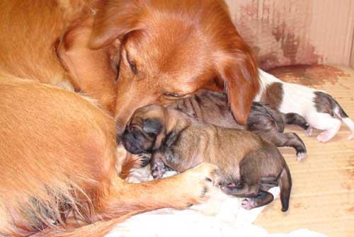 愛犬サンバの写真
