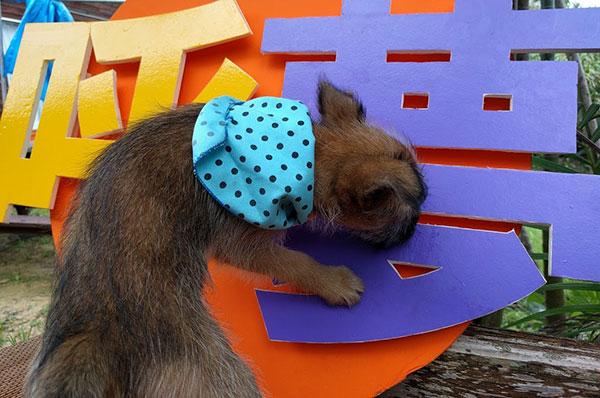 愛犬サンシンちゃんの赤ちゃん