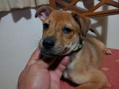 愛犬サンシンちゃんの赤ちゃん 愛犬物語