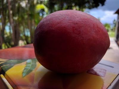 沖縄産 マンゴー