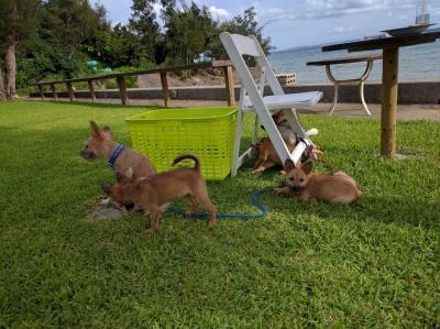 ペットと一緒に食事 沖縄