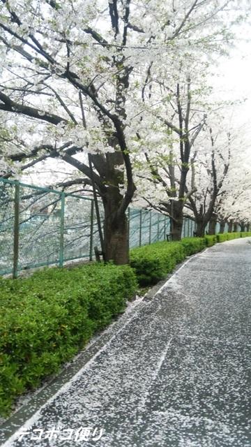 20160409 桜2