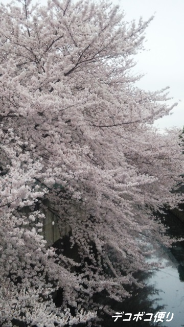 20160409 桜4