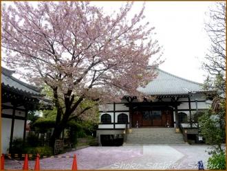 20160409 桜  1  おたまじゃくし