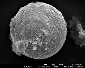 Archean Micrometeorite
