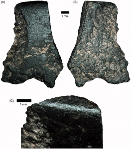 45000 to 49000 years ago axe fragment