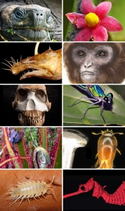 Top 10 New Species for 2016