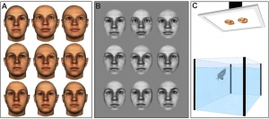 Discrimination of human faces by archerfish