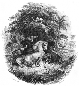 electric eels attacking horses