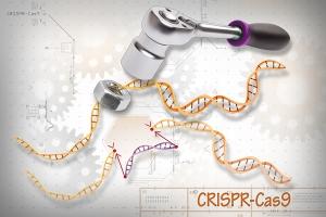 CRISPR-Cas9.jpg