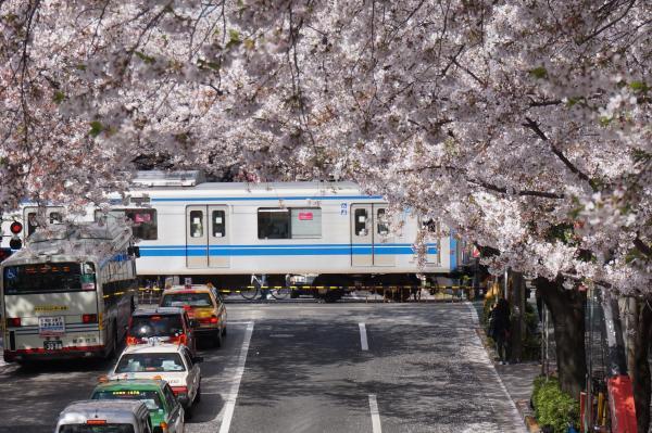 2016-04-06 中野通り 桜1