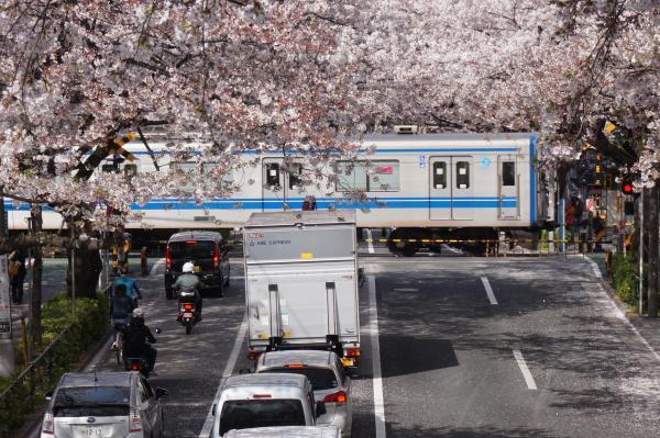 2016-04-06 中野通り 桜3