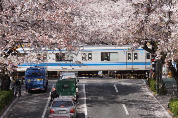 2016-04-06 中野通り 桜5