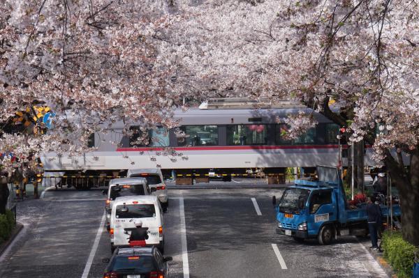 2016-04-06 中野通り 桜6