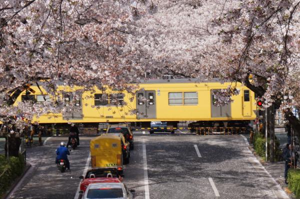 2016-04-06 中野通り 桜7