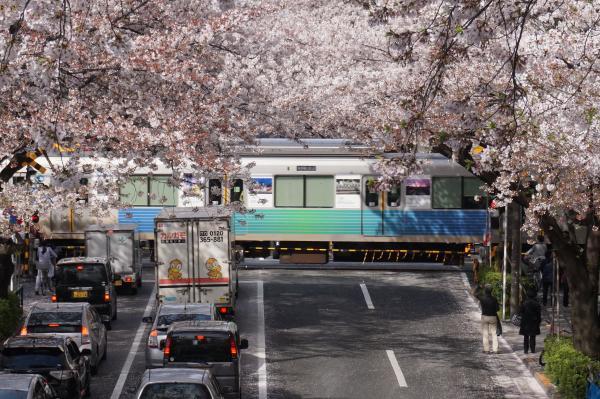 2016-04-06 中野通り 桜9