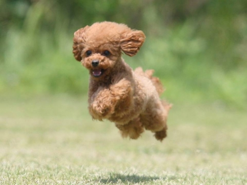 飛行犬モカ