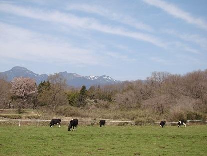 チーズ工房農場