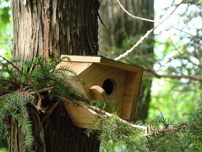 傾いた巣箱