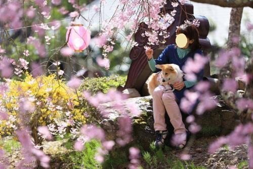 しだれ桜の下で